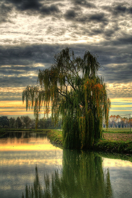 """""""the lone tree"""" by Alex '77 @ Flickr.com"""