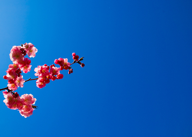 """Photo Source: """"Blue Skies, Smiling At Me"""" by EJP Photo @flickr.com"""